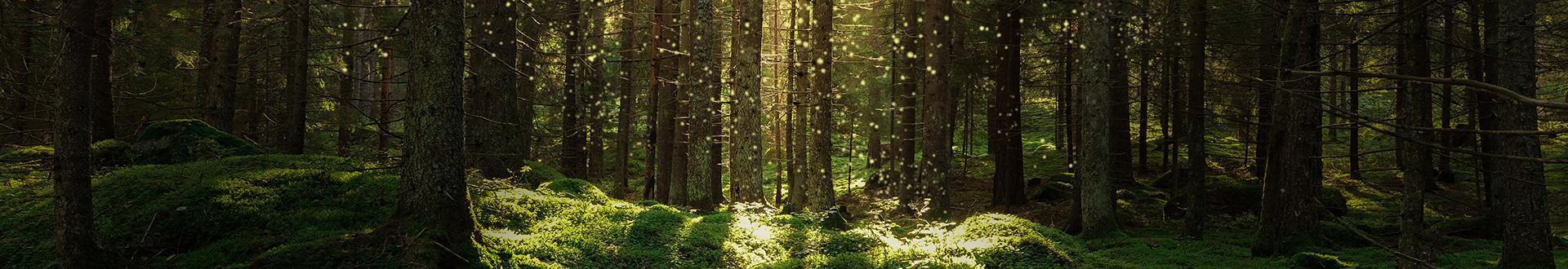 słoneczny las